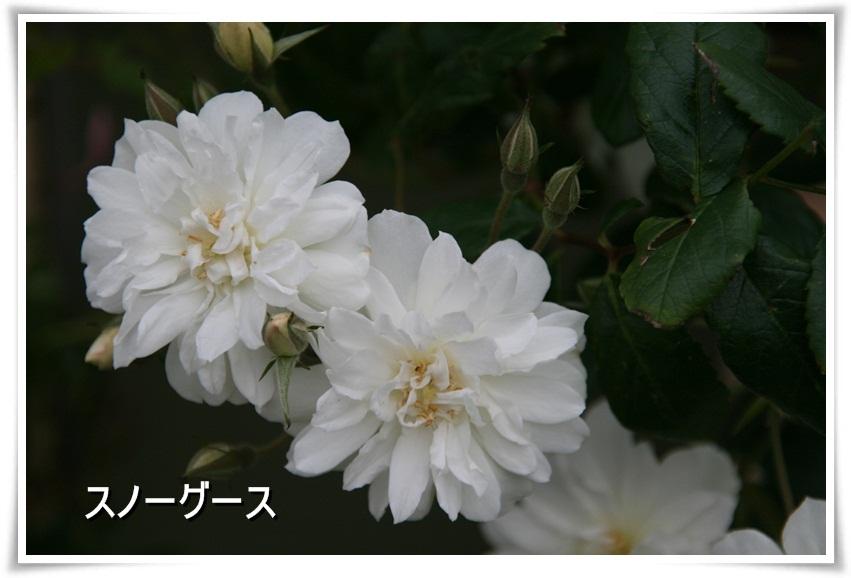 Img_0493_2