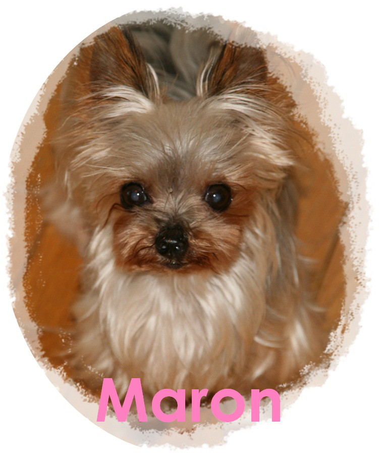 Maron1